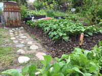 Potatisodling-2015-06-06